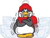 shivering penguin