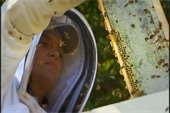 beekeeper with honeybees on honeycomb slat