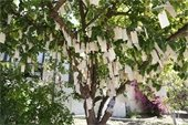 Tree with written wishes hanging on branches