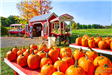 Pumpkins for sale at Eddy Farm Roadside Stand
